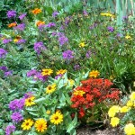 Colorful flowers abound